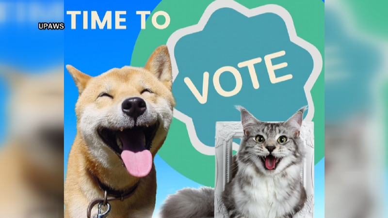 The voting contest is a big fundraiser for the shelter.