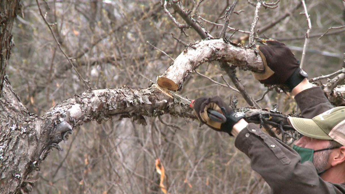 District Forester Matt Watkeys, Event Hosts Tom & Sonya Seablom arrange outdoor pruning...