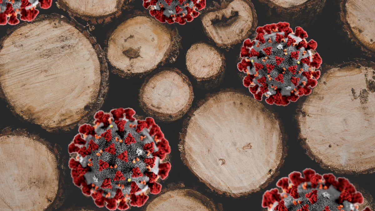 Timber harvesters and haulers can apply now for a share of $200 million in federal aid for...