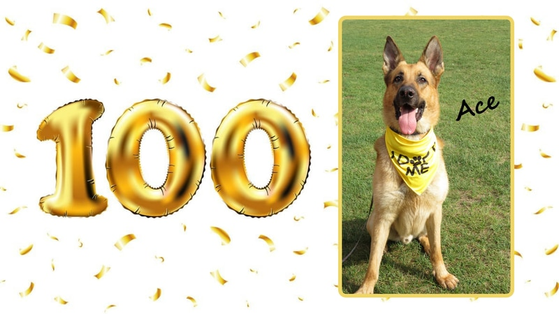 The Dawgz Adapt program, while partnered with the Delta Animal Shelter, welcomed its 100th...