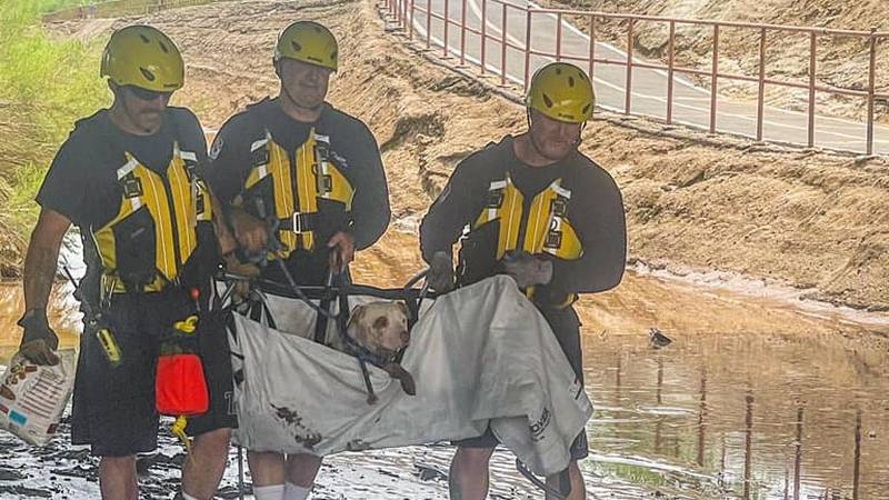 The pup found itself stranded on an island in the middle of the Rillito River on Sunday, which...