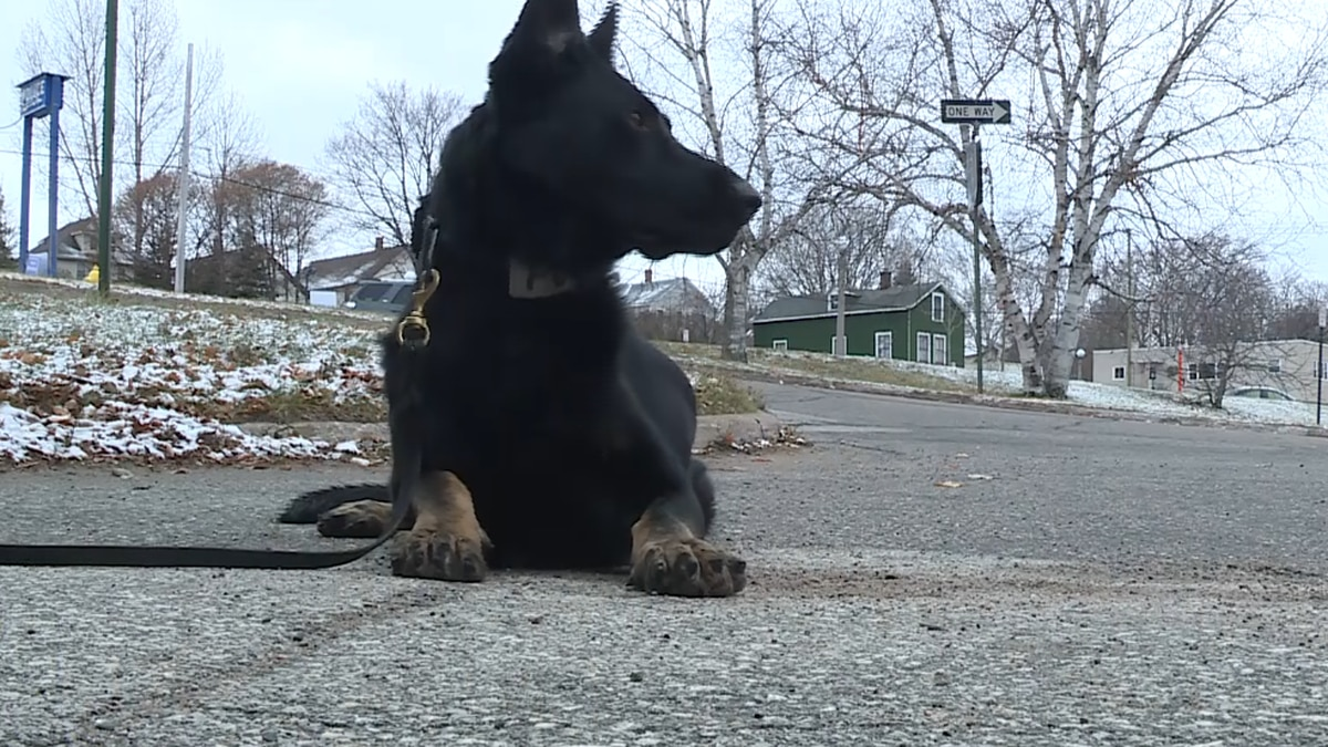FILE. K9 Zepp of the Marquette Police Department.