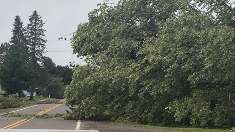 A tree down in the Marenisco area following storms that moved through the area Monday night and...