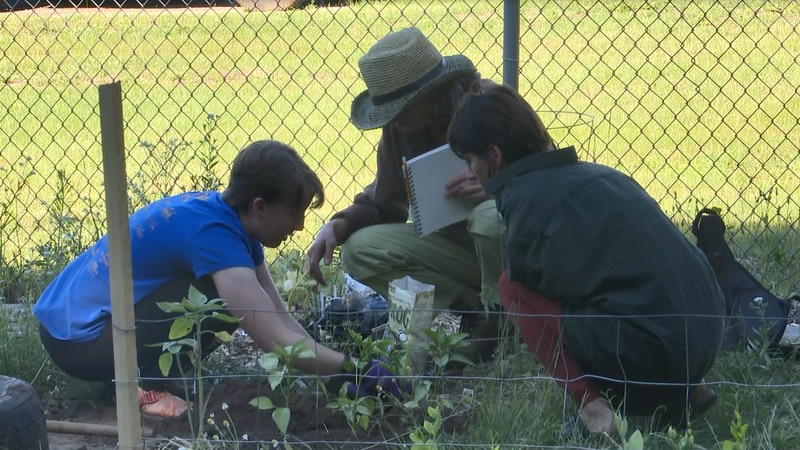 Growers plant crops and make sure the garden is healthy