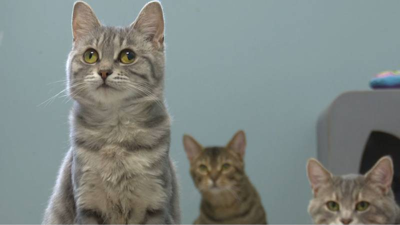 Some of the cats available for adoption.