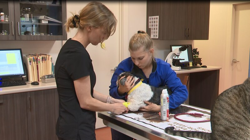 Vet clinics adjusting services after Michigan COVID-19 restrictions lifted