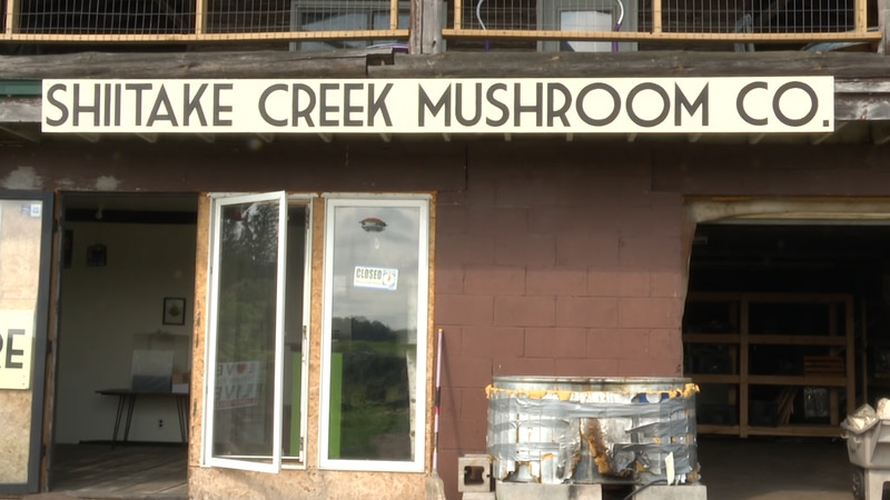 One local farmer grows and harvests dozens of wild mushrooms on the farm.