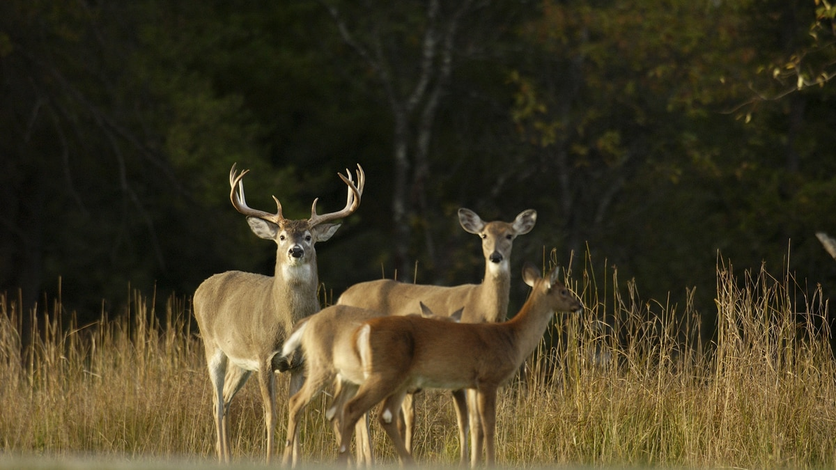 A new package of proposed deer regulations, for the 2021 fall deer hunting season, will be...