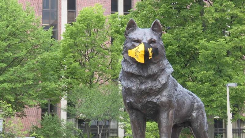 The husky statue on Michigan Tech's campus dons a mask during the COVID-19 pandemic.