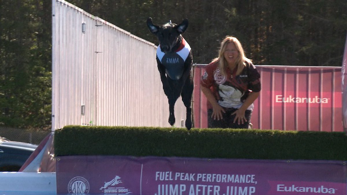 The all breed show featured canine dock diving trials, a qualifier event for the North America...