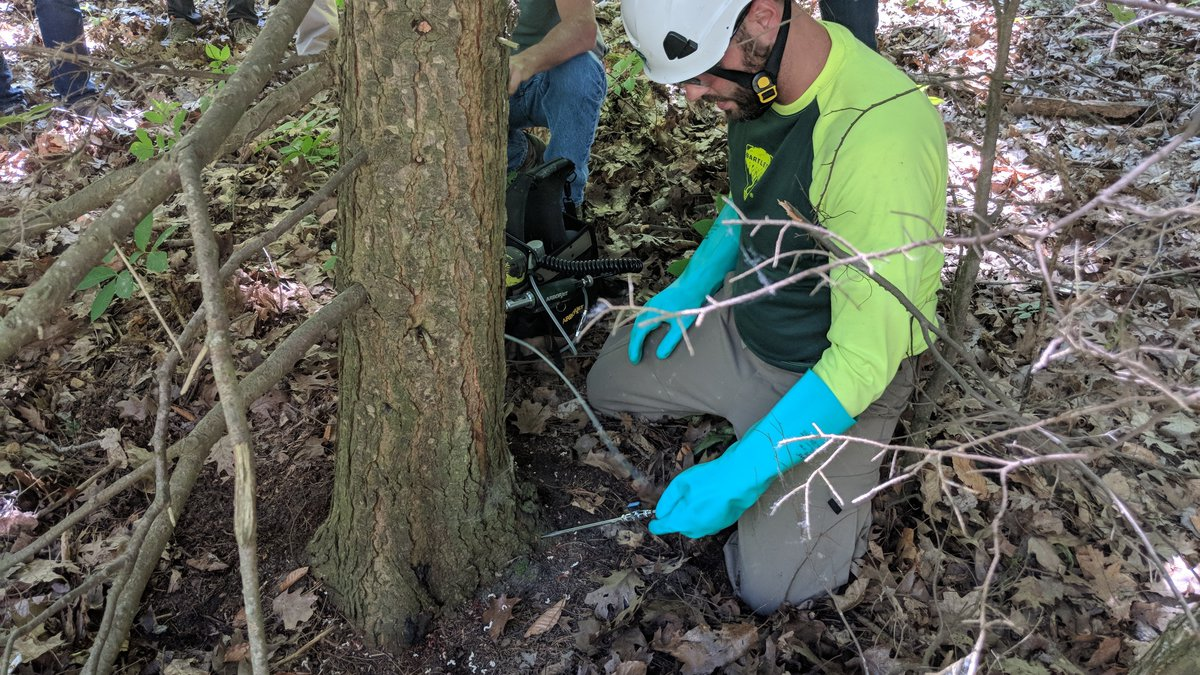 A certified pesticide applicator prepares a pesticide injection for a hemlock tree infested...