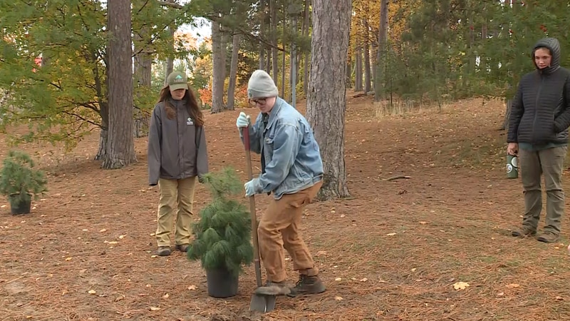 Trees being planted in Marquette