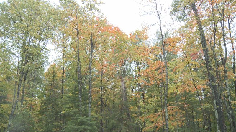 Leaves changing color near Sugarloaf Mountain.