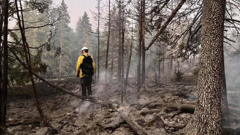 A firefighter stands on a portion of burnt forest on Isle Royale National Park.