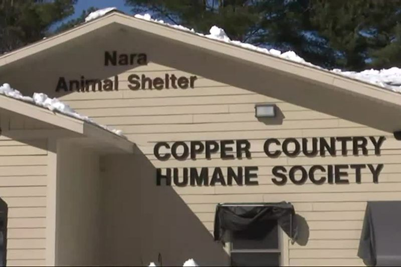 Nara Animal Shelter, Copper Country Humane Society in Houghton, Michigan.