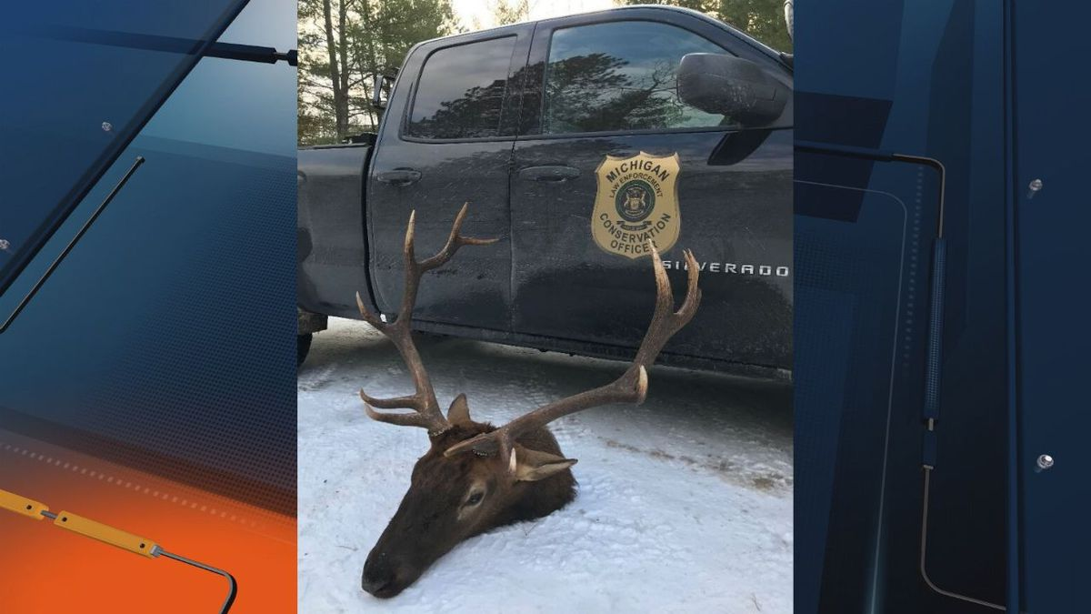 Conservation officers are seeking tips about a poached elk in Otsego County, Michigan. Anyone...