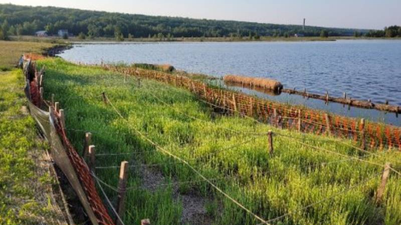 Constructed wetland experimental plot at Torch Lake in Houghton County in the Upper Peninsula.