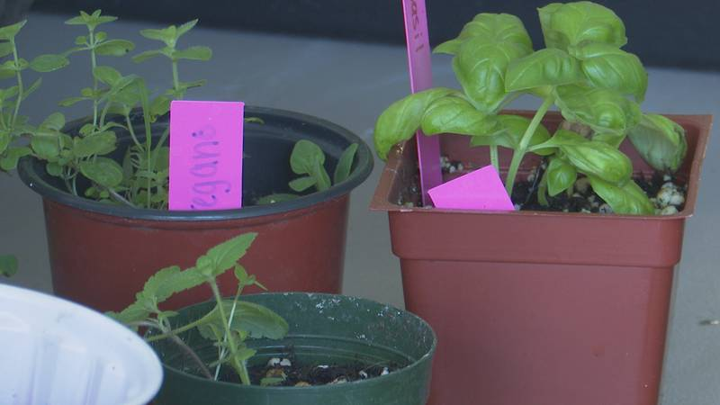 Partridge Creek Farms held a plant sale at its Ishpeming store front Wednesday.