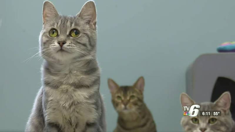 Delta Animal Shelter to host special Caturday sale