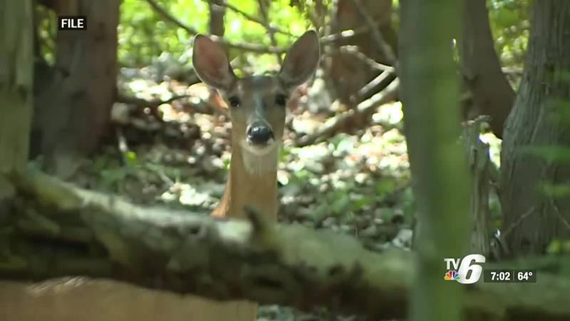 Firearm deer hunting season to begin next month