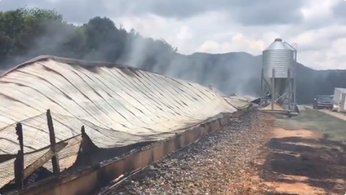 A fire overnight destroyed a 450-foot long chicken house building and killed about 11,000 chickens. (Source: WBTV)