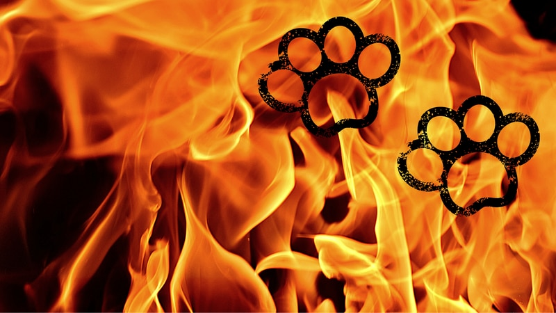 Fire and paw prints graphic.