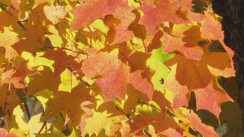 Fall colors in Marquette County