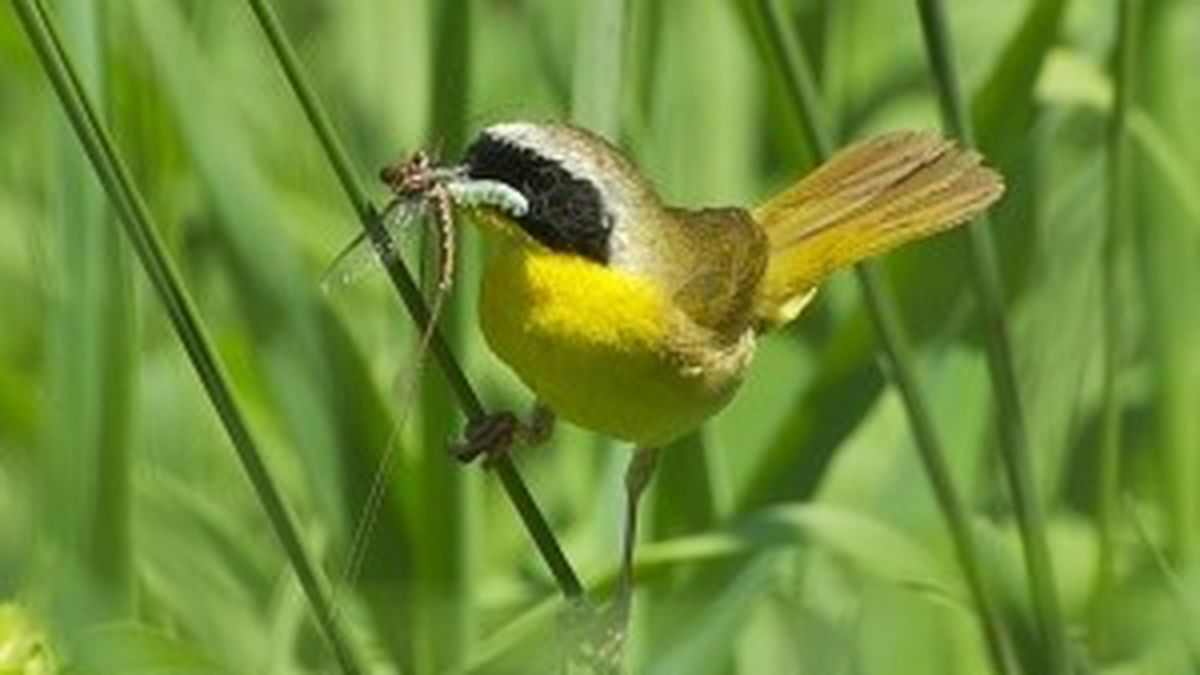 Photo courtesy: Michigan DNR; One of the many bird species you might find while exploring...