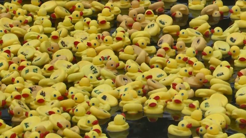 Winners of top ten ducks receive cash prizes